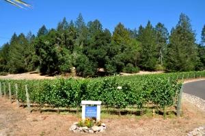 Kerry's Vineyard
